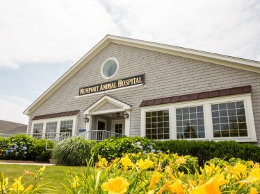 Home - Newport Animal Hospital